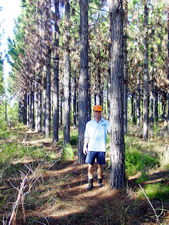 Rodger Peters in a stand of 7 year old trees of clone 545 at Toolara State Forest, Queensland. DPI Forestry photo.