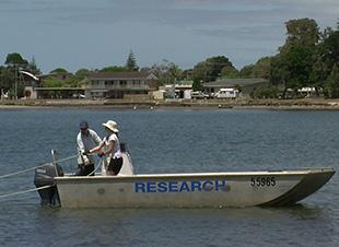 Prawn research boat