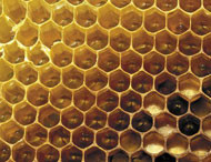 Empty honey comb