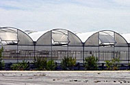 Medium technology greenhouse