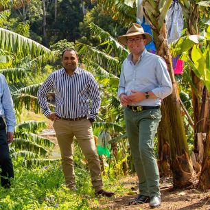 Minister Adam Marshall with Member for Coffs Harbour, Gurmesh Singh at a banana farm near Coffs Harbour