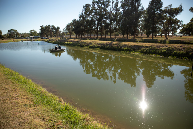 Narrandera ponds width=
