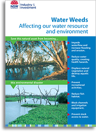 Water weeds affecting our environment