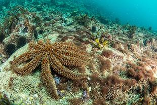 Marine life seastar
