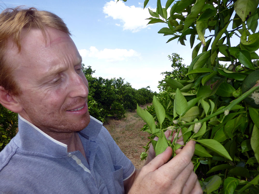 A close-up of Scott as he inspects a citrus tree