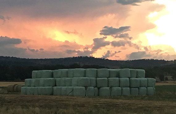 Round silage stacked 3 high against a stormy sunset (Photo: Mel Case)