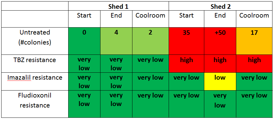 Results of Decay colonies