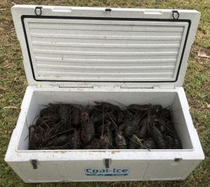 Cooler box found in Range Rover containing Eastern Rock Lobsters