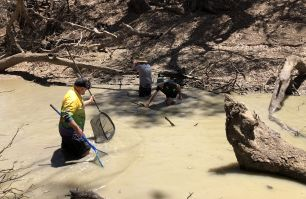DPI Fisheries staff and volunteers relocating native fish in the Macquarie River
