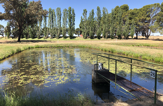 Pond at Narrandera