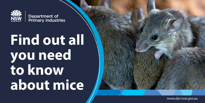 Find out all you need to know about mice