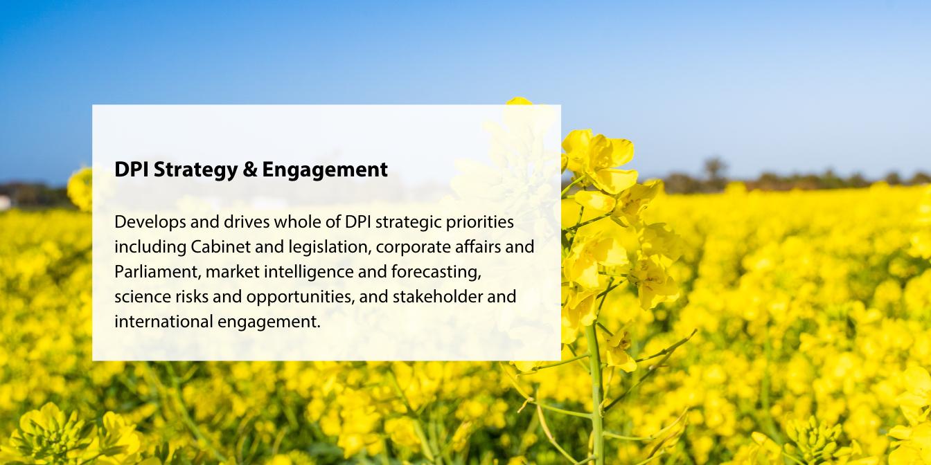 DPI Strategy & Engagement