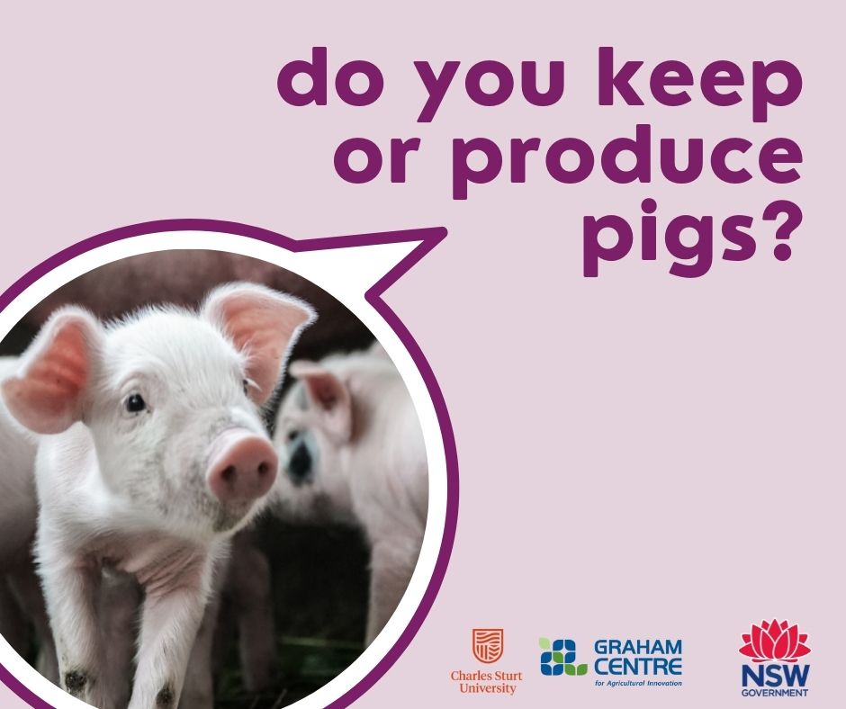 NSW Pig Health & Biosecurity survey now open - we want to hear what is important to you when thinking about protecting your pigs from pests and disease