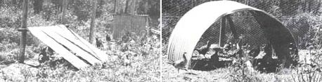 Good protective cover provided by a mixture of grasses and movable shelter