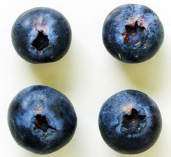 Figure 2. Blueberry rust pustules developing around the base of blueberry fruits