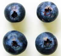 Four blueberry fruit showing areas of brown discolouration and yellow rust pustules around the base