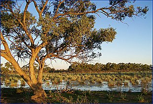 Cattleyard Swamp