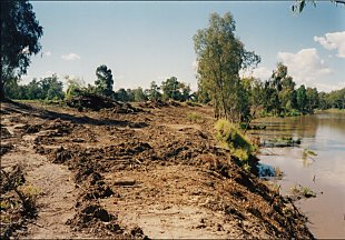 Clearing of riparian vegetation