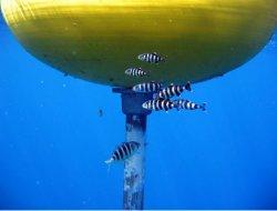 Fish around a Fish Aggregating Device (FAD).