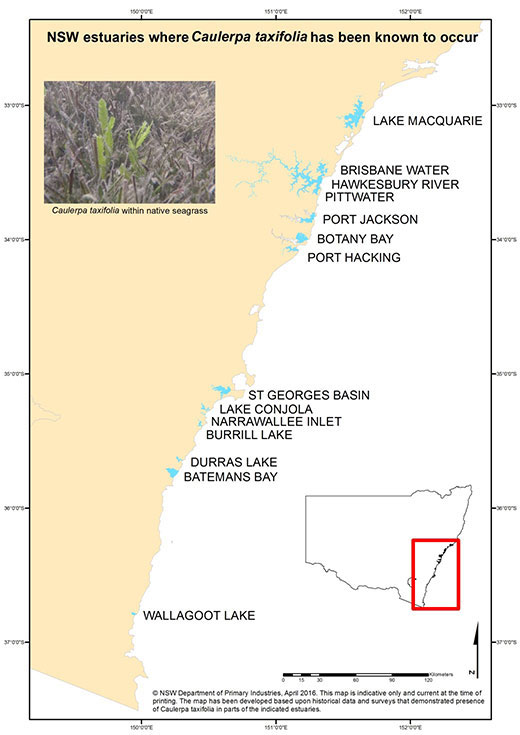 Map of All estuaries where Caulerpa taxifolia has been found in NSW since 2000