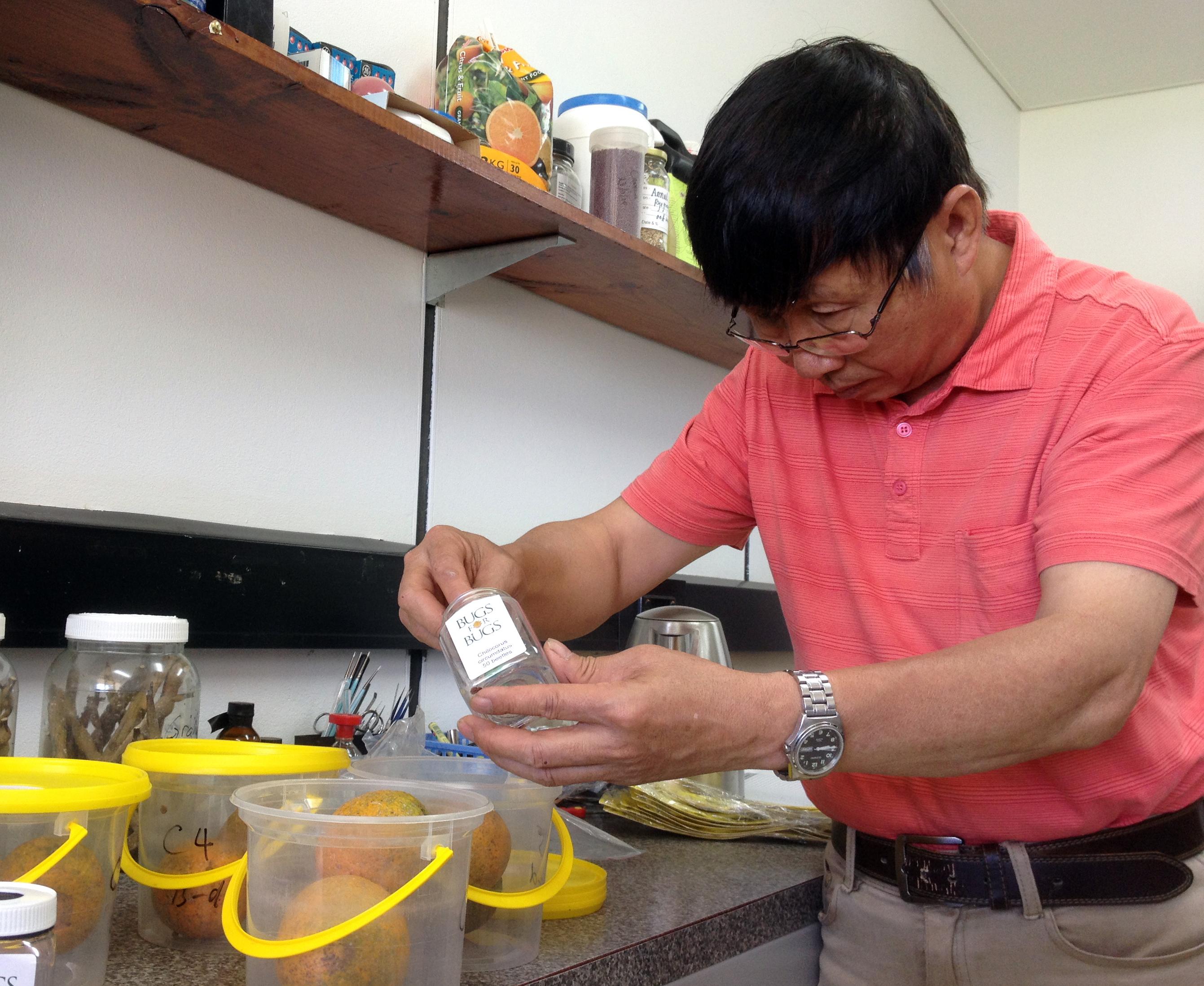 Dr Jianhua Mo's national citrus gall wasp