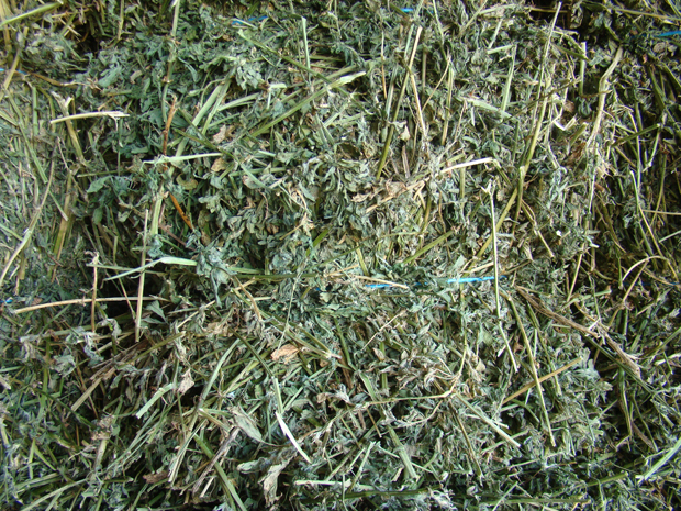 A close up of green leafy hay