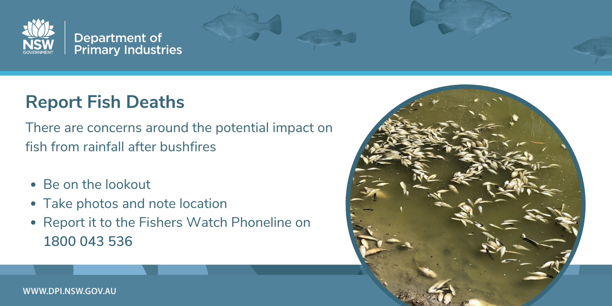 Report Fish Deaths - There are concerns around the potential impact on fish from rainfall after bushfires. Be on the lookout, take photos and note location and report it to the Fishers Watch Phone on 1800 043 536