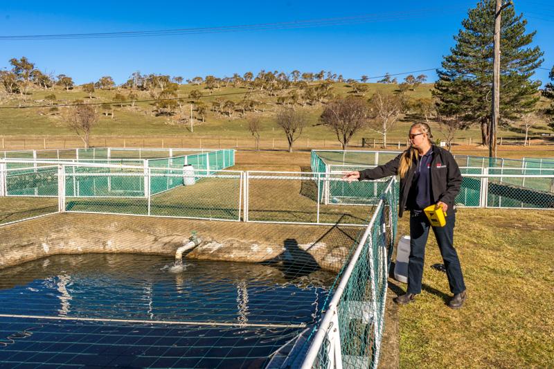 Fish rearing ponds