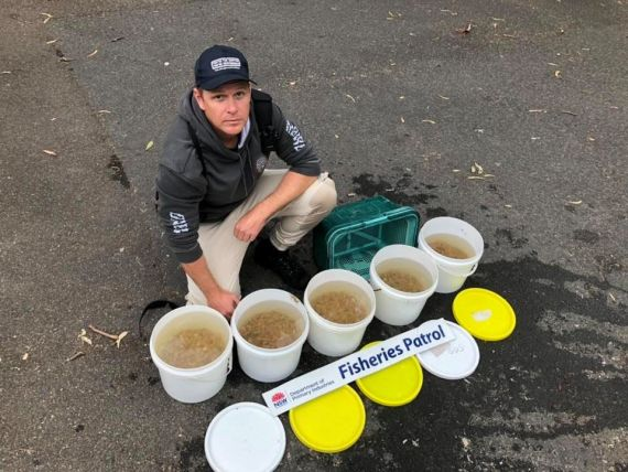 Fisheries Officer with large quantity of saltwater nippers seized in the Sydney area