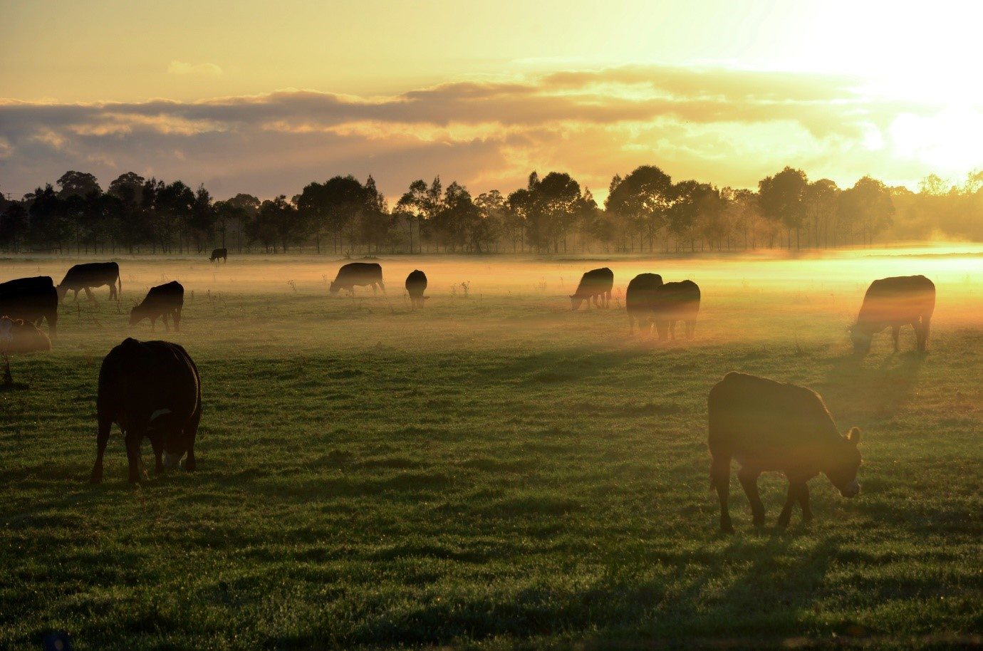 NSW DPI scientists have been heralded for their contribution to extensive livestock with inclusion in the 60th Anniversary special edition of Animal Production Science journal.