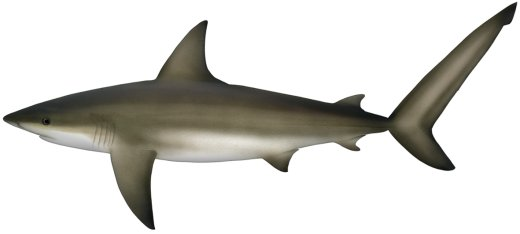 Sharks for Kids: 24 Exciting Shark Pictures and