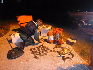 Seized crabs and finfish