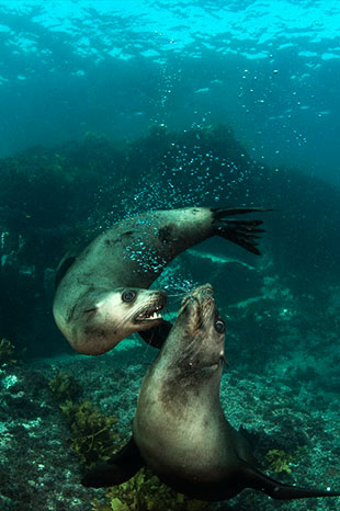 Threatened and protected species,Seals