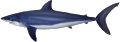 Shark - Mako