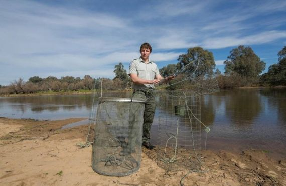 Fish traps seized from the Murray River