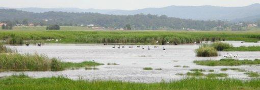hexham swamp