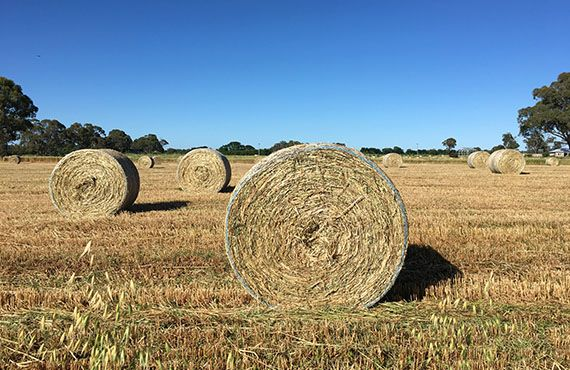 Photo of 3 round hay bales in foreground with blue sky background (Photo: Mel Case)
