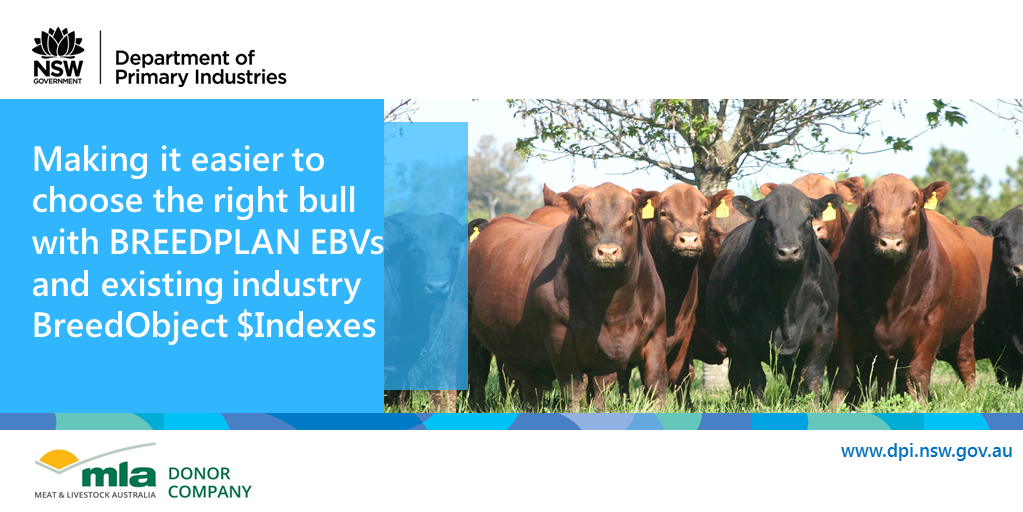 Making it easier to choose the right bull with BREEDPLAN EBVs and existing industry BreedObject $Indexes