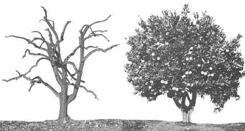 Skeleton pruning