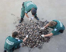 Officers counting abalone