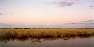 Canegrass swamp near Tilpa