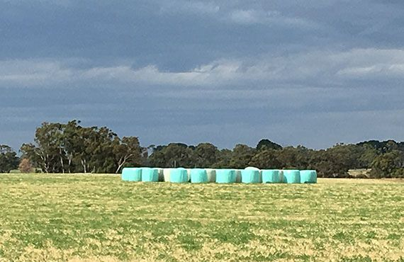 Photo of silage in paddock against dark sky (Photo: Mel Case)