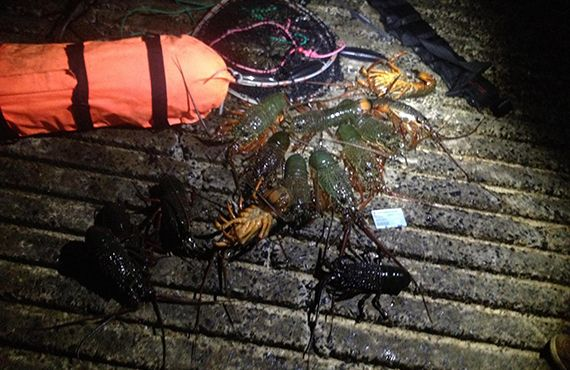 Seized lobsters and dive gear from Terrigal (NSW Central Coast) on the ground
