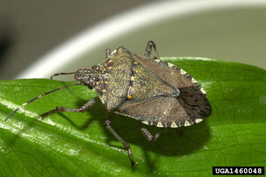 A close up of the bug