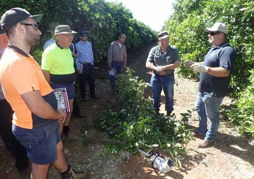 Stevens discusses pruning at the roadshow