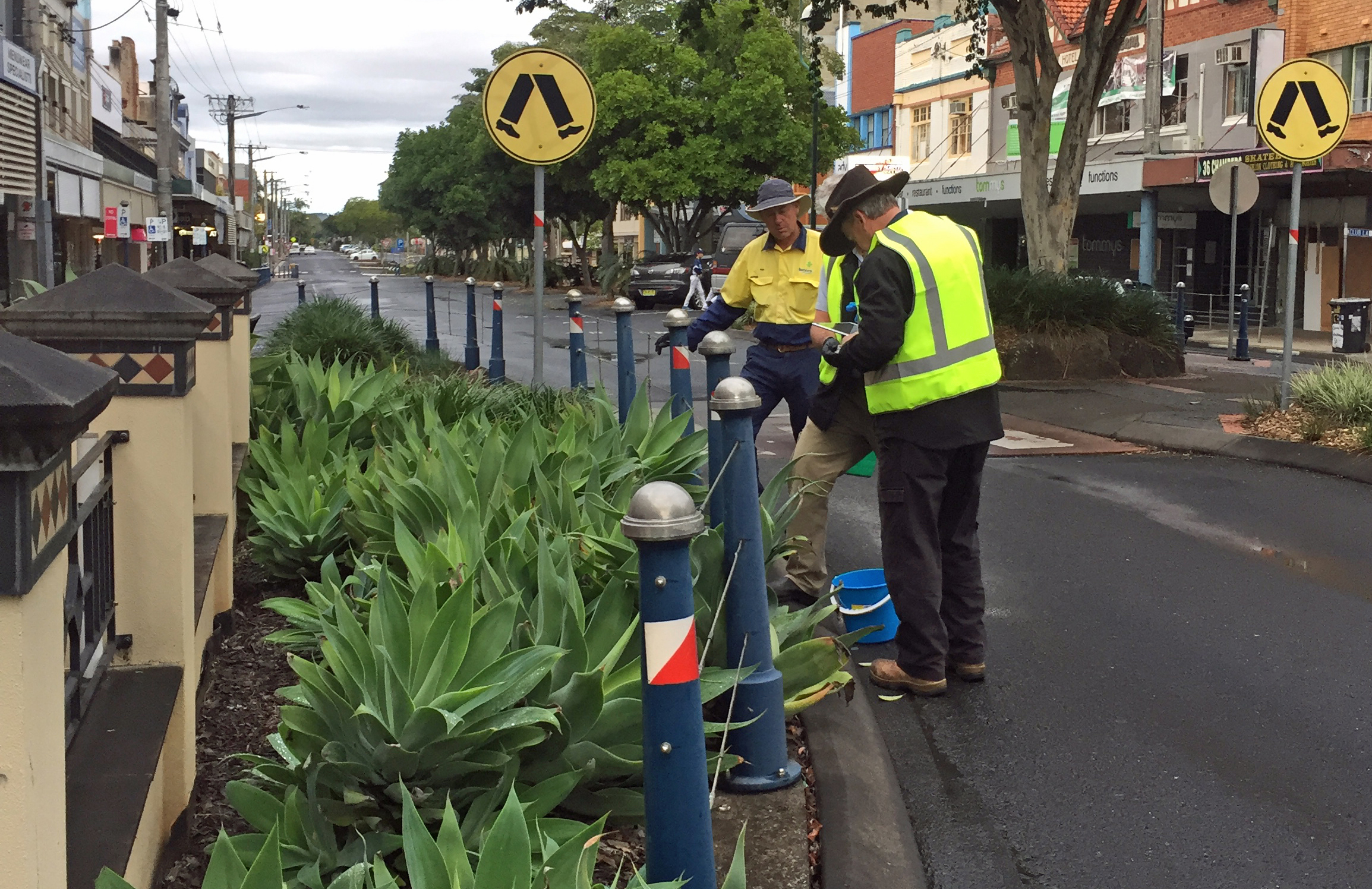 NSW DPI and Lismore Council staff baiting and tracking yellow crazy ants in Molesworth Street, Lismore
