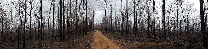 Kiwarrak State Forest after bushfire