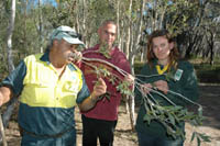 Aboriginal cultural heritage officer Richard Kelly and Yarrawarra Aboriginal Cultural Heritage Centre officer Milton Duroux show North East Region ecology team member Anna Lloyd the significance of paperbark tree leaves