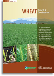 Wheat growth and development