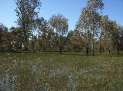 A wetland on the way to being rehabilitated